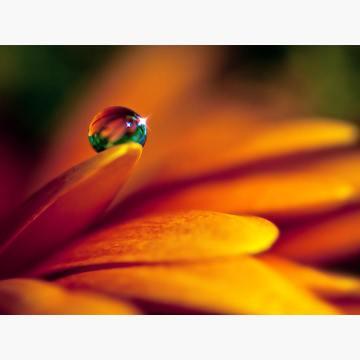Waterdoponflower